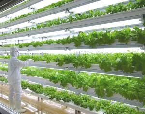 vegetable_factory