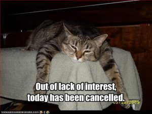 funny-pictures-cat-cancels-today_out-of-interest